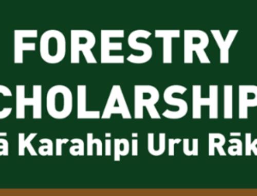 Forestry Scholarships – Ngā Karahipi Uru Rākau!